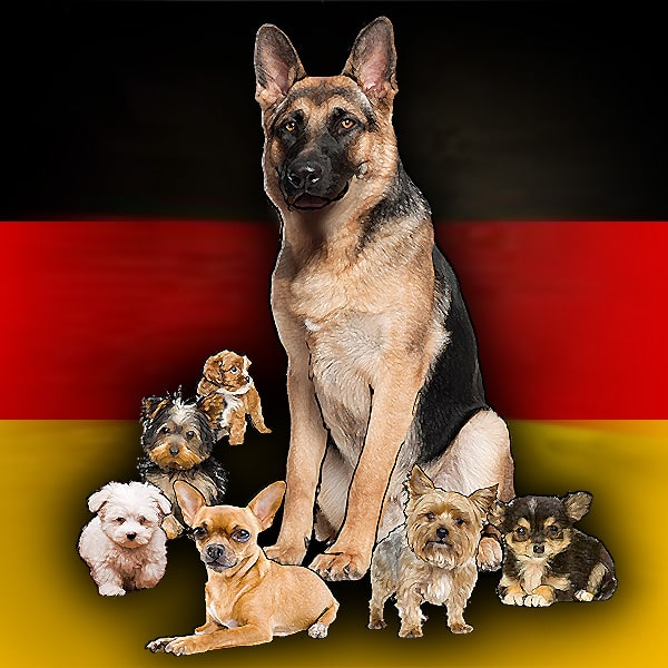 Be top dog in Germany